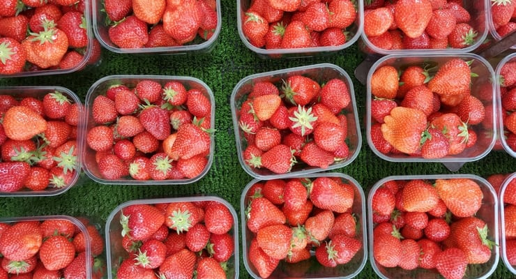 The Best Places to Pick Your Own Berries Near Greenville, SC